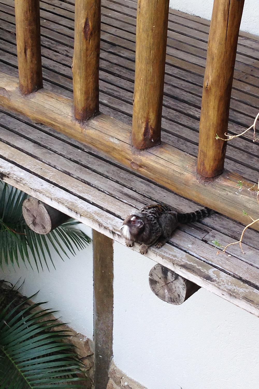 travel-ilha-grande-makake